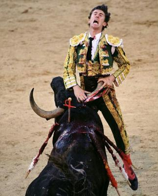A Spanish matador is fighting for his life after being gored during a bullfight in Madrid.